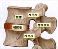 椎体の構造