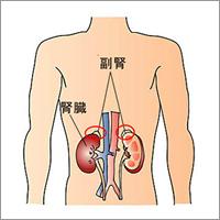 ツボの紹介 副腎