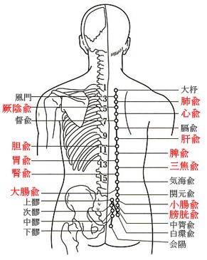 鍼 神尾 -豊島区雑司が谷の鍼灸...